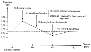 glycemie-chronologie